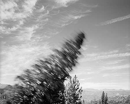 Falling Tree #3, copyright David Paul Bayles