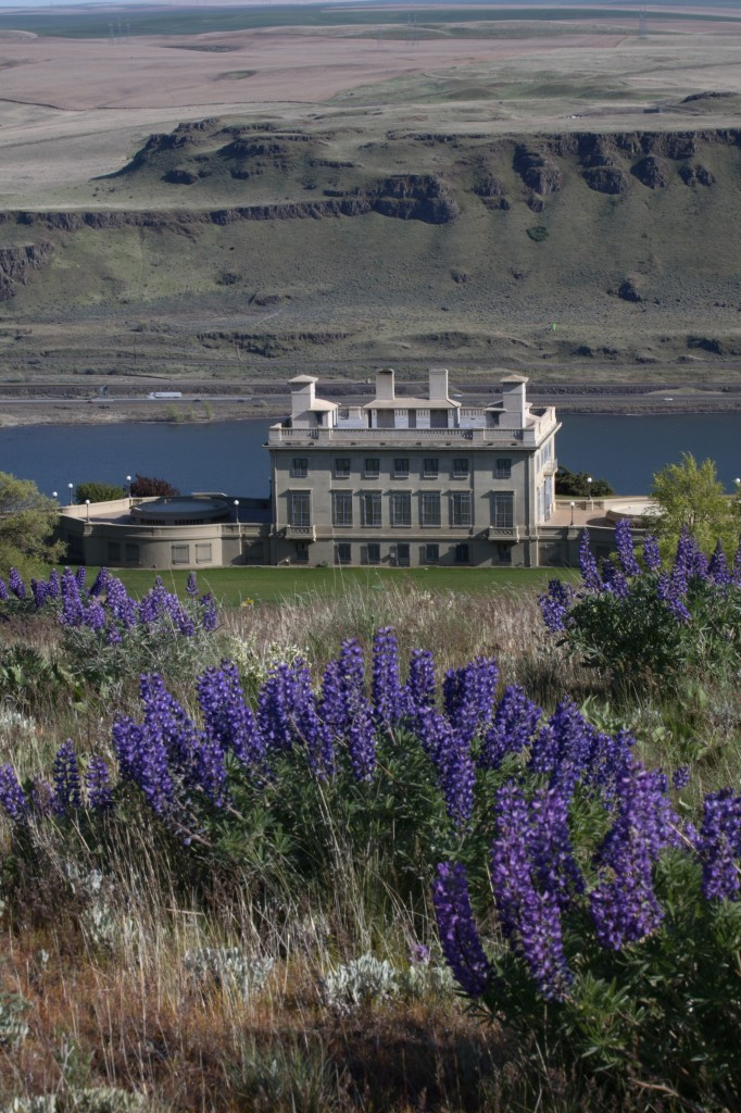 Maryhill with spring lupine. Photo: Nyland Wilkins